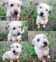 Marnie Collage