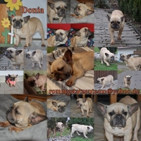 Donia Collage