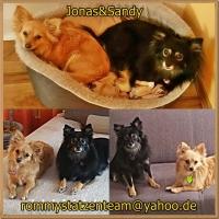 Jonas und Sandy Collage