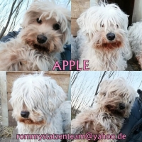 Apple Collage_o