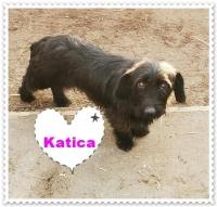 Katica6
