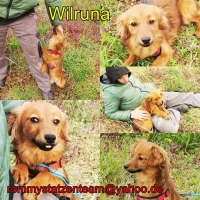 Wilruna Collage