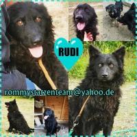 Rudi Collage