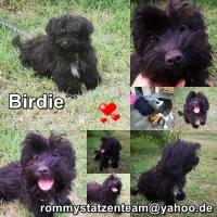 Birdie Collage neu