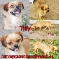 Tiffy Collage