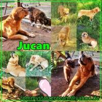 Jucan Collage mit Katzentest