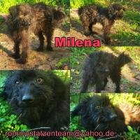 Milena Collage