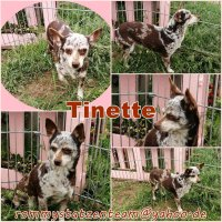 Tinette Collage