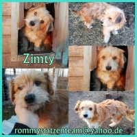 Zimty Collage