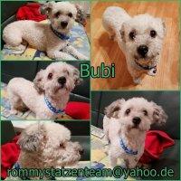 Bubi Collage