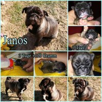 Janos Collage