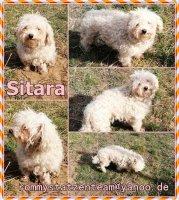 Sitara Collage